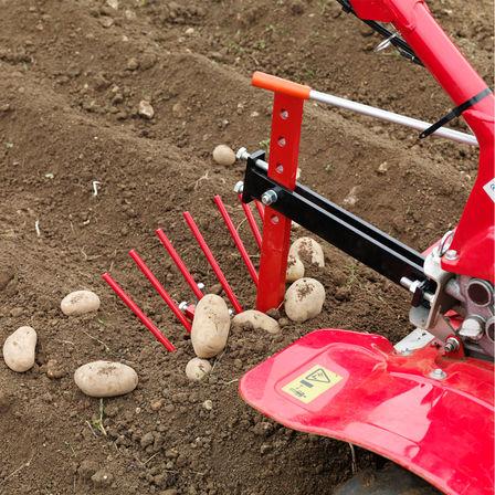Motoculteur transformable avec, en option, une arracheuse de pommes de terre, dans un jardin.